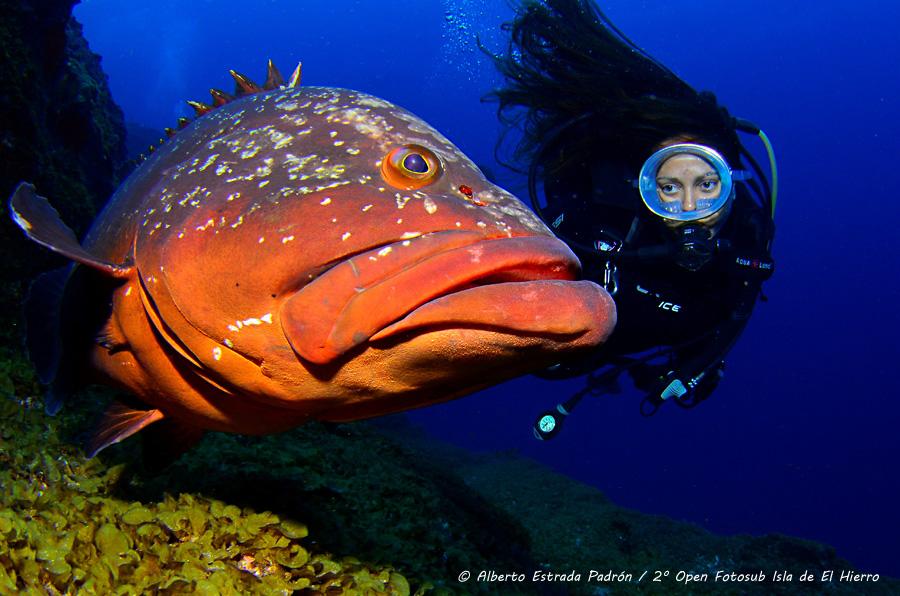 ¡El fotógrafo submarino Alberto Estrada ganador de la foto del mes de octubre!
